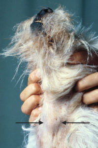 Puppy Up Foundation Thyroid Tumors In Dogs