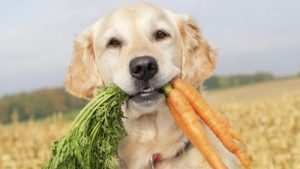 Yes, carrots are good for dogs!