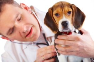 man-with-beagle