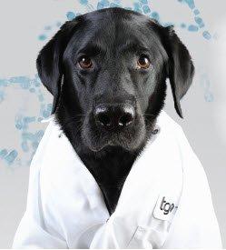 TGen Dog