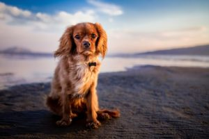 3 Tips For Fighting Canine Cancer