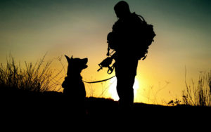 National K9 Veterans Day on March 13 Honors America's Military Dogs