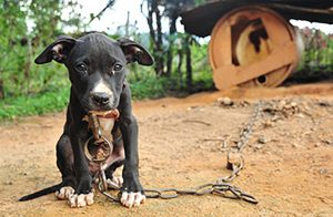 National Dog Fighting Awareness Day – April 8