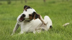 Helping scratch your dog's itch