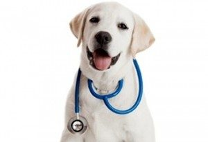 9 Pet Conditions That Cannot Wait for Medical Attention
