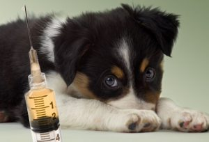Puppy Up Foundation Two Views On Rabies Vaccinations