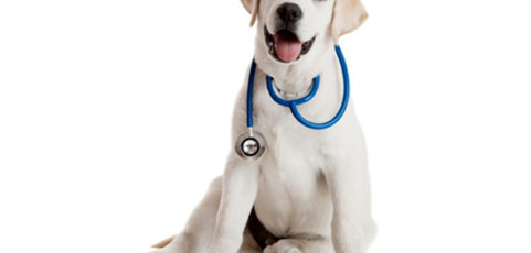 Veterinarian Turns Dog Owner's Tragedy Into Cloud Based EHR For Pets