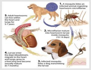 Potentially Toxic for Your Pet – Watch Out for This Popular Preventive