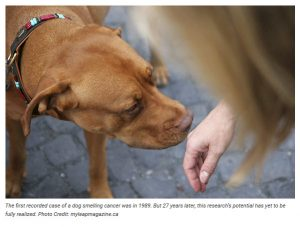 Puppy Up Foundation Is It True Can Dogs Smell Cancer Lactose Intolerance